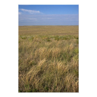 Pradera del prado al este de Sidney, Nebraska Póster