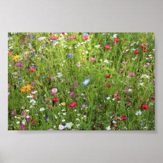 Prado de flor póster
