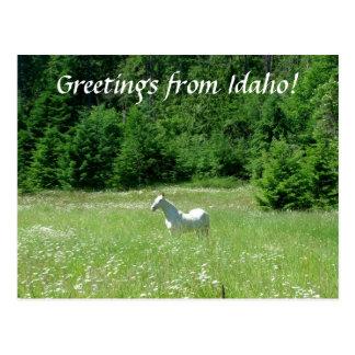 Prado de Idaho - postal