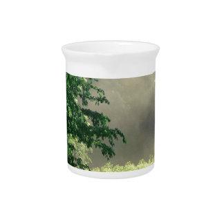 Prado de la mañana del árbol jarras