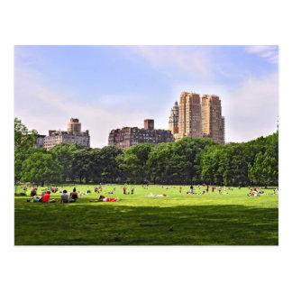 Prado de las ovejas de Central Park Tarjetas Postales