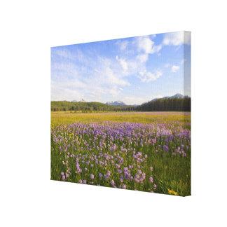 Prado de los wildflowers del penstemon en impresiones en lona
