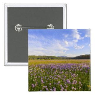 Prado de los wildflowers del penstemon en los 2 pin cuadrado
