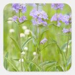 Prado de los wildflowers del penstemon en pegatinas cuadradas
