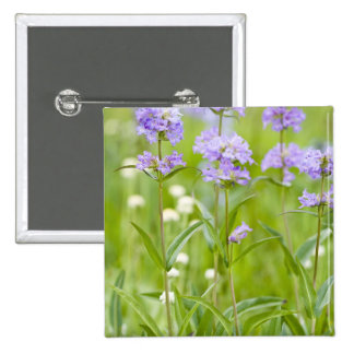 Prado de los wildflowers del penstemon en pin cuadrado