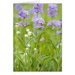 Prado de los wildflowers del penstemon en felicitación
