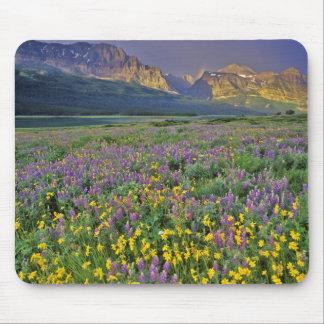 Prado de wildflowers en los muchos glaciar alfombrilla de raton