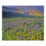 Prado de wildflowers en los muchos glaciar foto