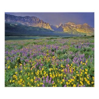 Prado de wildflowers en los muchos glaciar fotografía