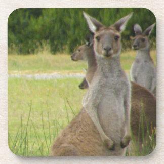 Prado del canguro posavaso