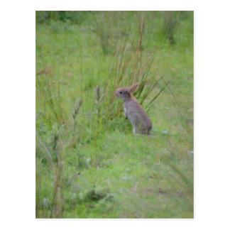 Prado del conejo tarjetas postales