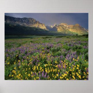 Prado del terraplén de los wildflowers de la prade póster