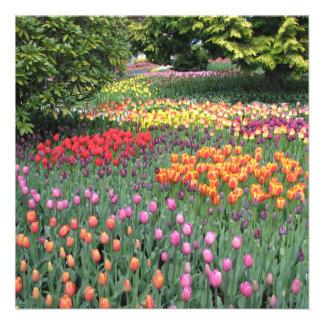 Prado del tulipán