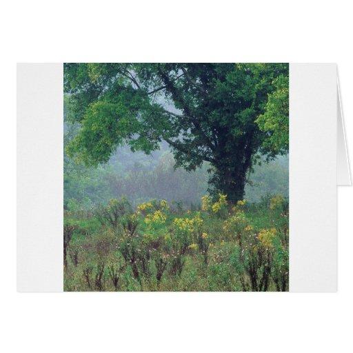 Prado del verano de los árboles tarjeta de felicitación