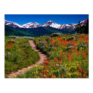 Prado del Wildflower de Colorado Tarjeta Postal