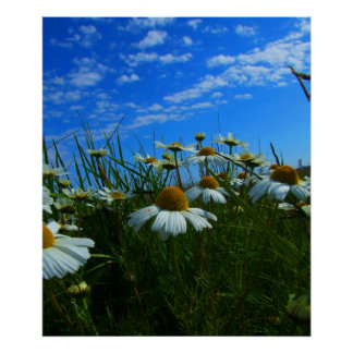 prado en verano póster