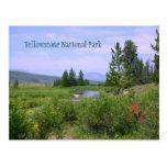 Prado en Yellowstone Tarjetas Postales