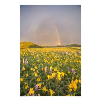 Prado espectacular del wildflower en la salida del cojinete