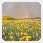 Prado espectacular del wildflower en la salida del calcomanías cuadradass