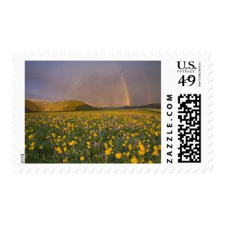Prado espectacular del wildflower en la salida del sellos