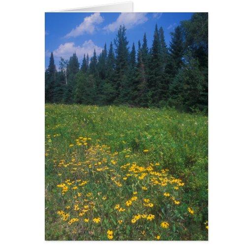 Prado y bosque Spruce, Vermont del Wildflower Tarjeta De Felicitación
