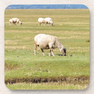 Prados de la sal de las ovejas posavasos de bebida