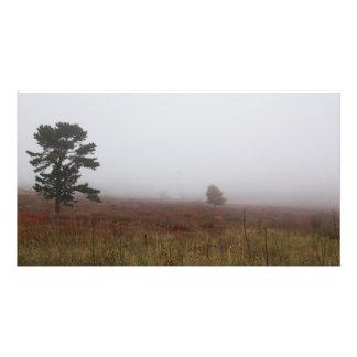 Prados grandes de niebla durante caída, Virginia Cojinete