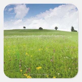 prados verdes del verano en Baviera ostallgäu co Calcomanías Cuadradas Personalizadas