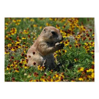 Praire Dog Card