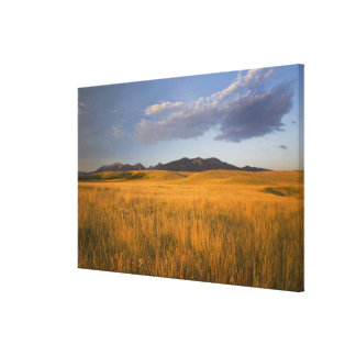 Praire grasslands in the foothills of the canvas print