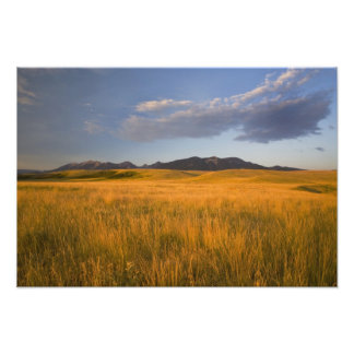 Praire grasslands in the foothills of the photograph