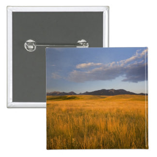 Praire grasslands in the foothills of the pinback button