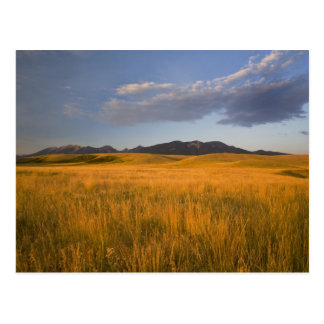 Praire grasslands in the foothills of the postcard