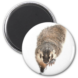 Prairie Badger in Winter snow Magnet