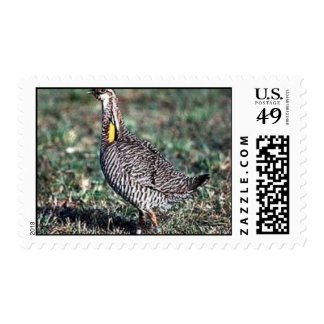 Prairie-chicken, Attwater's greater (B00O) Postage Stamps