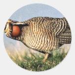 Prairie-chicken, lesser (B0AZ) Round Stickers