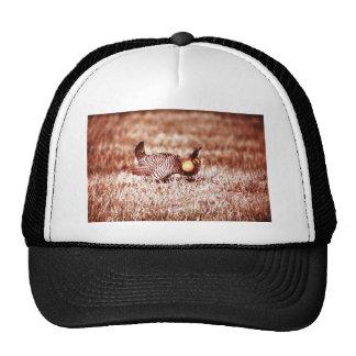 Prairie Chicken on Fergus Falls Prairie Trucker Hat