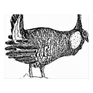 Prairie Chicken Postcard
