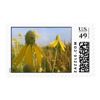 Prairie Coneflower Postage Stamps