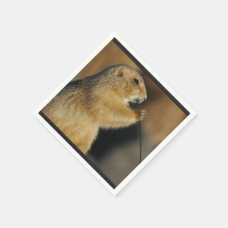 prairie-dog-4.jpg disposable napkin