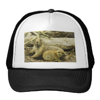 Prairie dog and pup mesh hats