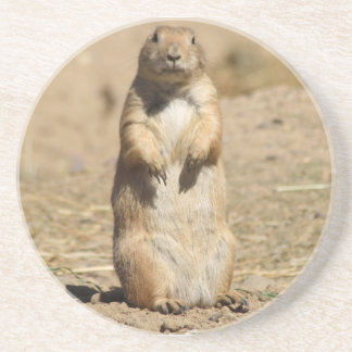 Prairie Dog Coaster