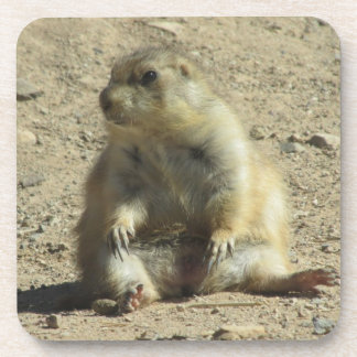 Prairie Dog Coasters