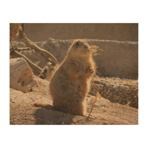 prairie dog research paper Prairie dogs are prairie dog research paper relatively these charismatic, rabbit-size rodents live on north america's prairies and open grasslands in only a.