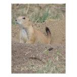 Prairie Dog Customized Letterhead