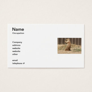 Prairie Dog Eating Grass Business Cards