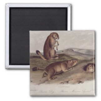 Prairie Dog from 'Quadrupeds of North America' 2 Inch Square Magnet