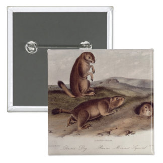 Prairie Dog from 'Quadrupeds of North America' Pinback Button