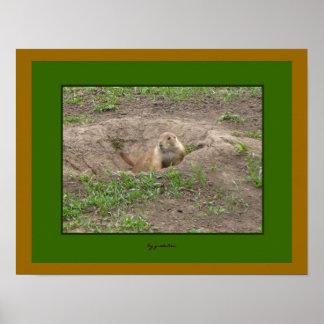 Prairie Dog Greeting Poster by gretchen