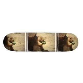 Prairie Dog Hanging Out Skateboard
